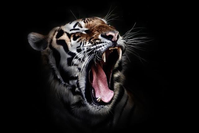Kisah Nyata Menguak Cara Mendapatkan Ilmu Manusia Harimau Wirafokus Com